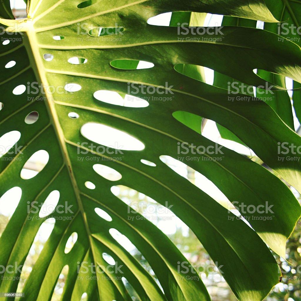 Sunlight falls through palm leaf. Toned photo. royalty-free stock photo
