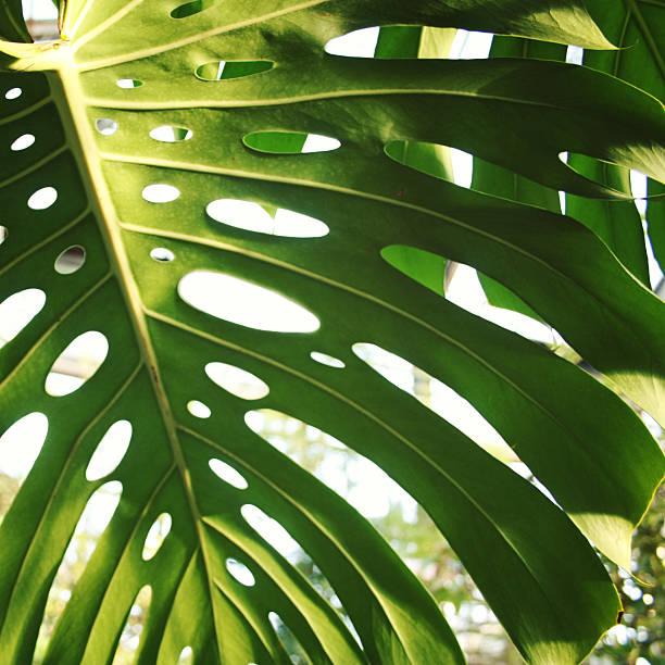 Sunlight falls through palm leaf. Toned photo. – Foto