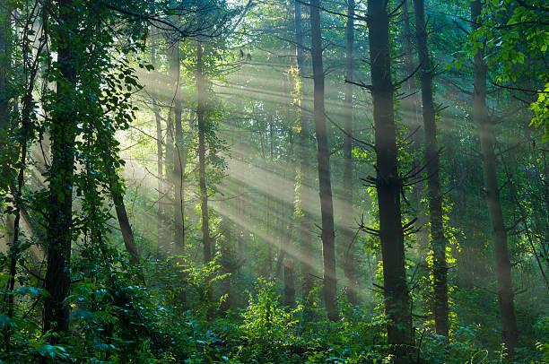 Forêt Primaire Banque d'images et photos libres de droit ...