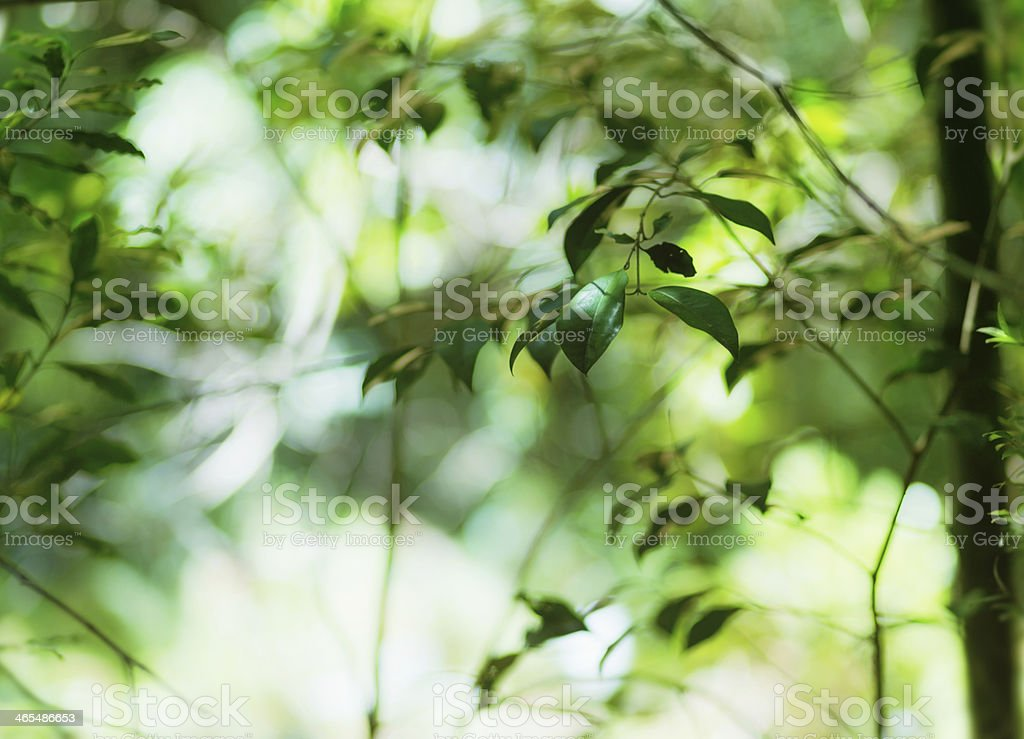 Sunlight filtering through fresh green leaves in forest royalty-free stock photo