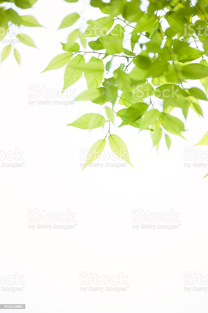 Sunlight filtering through leaves - foto de stock