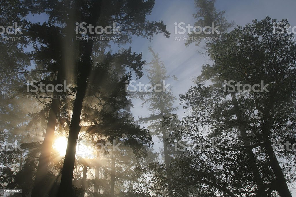 Sunlight filtering through the trees royalty-free stock photo
