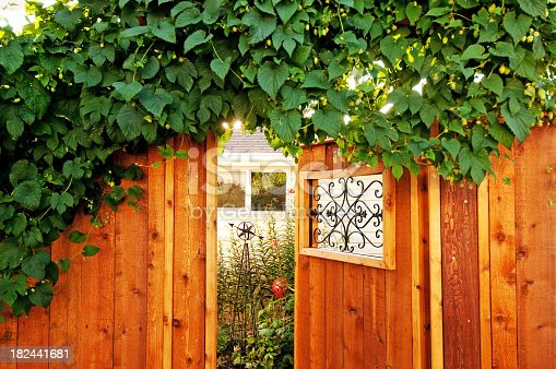 Sunlight filters through a hops plant growing over a garden gate.