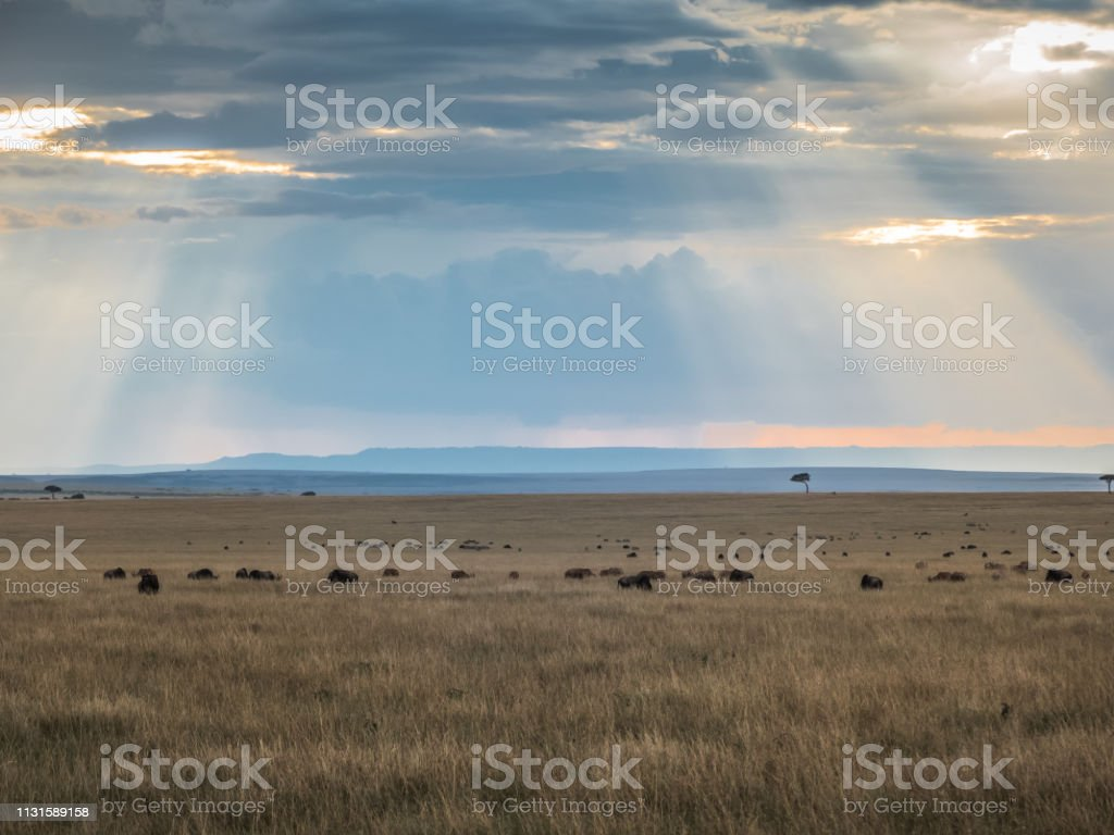 Masai Mara, KENYA - September, 2018. Sunlight filters through the big...