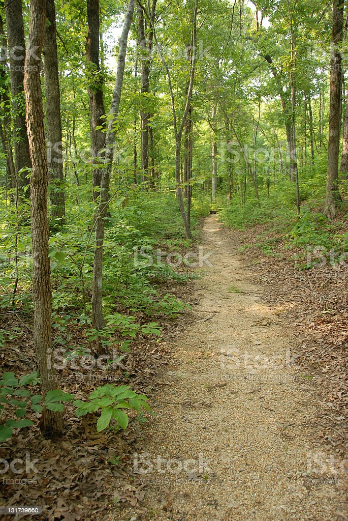 Sunlight filters through the trees along Natchez Trace royalty-free stock photo