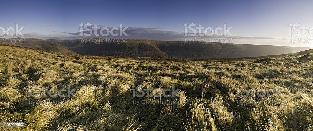 Sunlight flaring over golden grassland stock photo