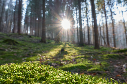 Sunlight illuminates moss on forest floor