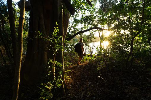 istock Sunlight Illuminates the Jungle Around a Hiker on a Trail 668838176