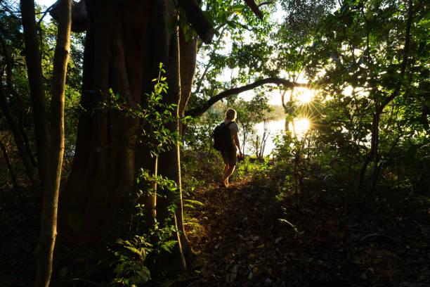 Sunlight Illuminates the Jungle Around a Hiker on a Trail stock photo