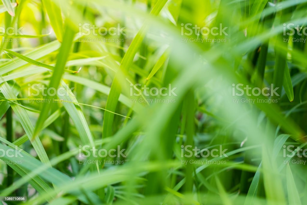 sunlight in plant leaves - garden concept background - stock photo