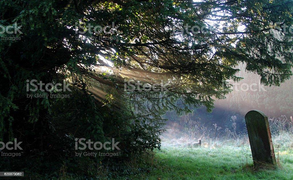 Sunlight In The Cemetery foto de stock royalty-free