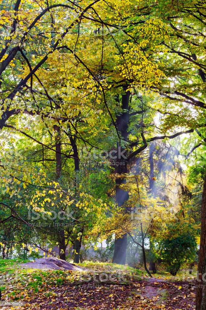 Sunlight in the green forest, spring time royalty-free stock photo