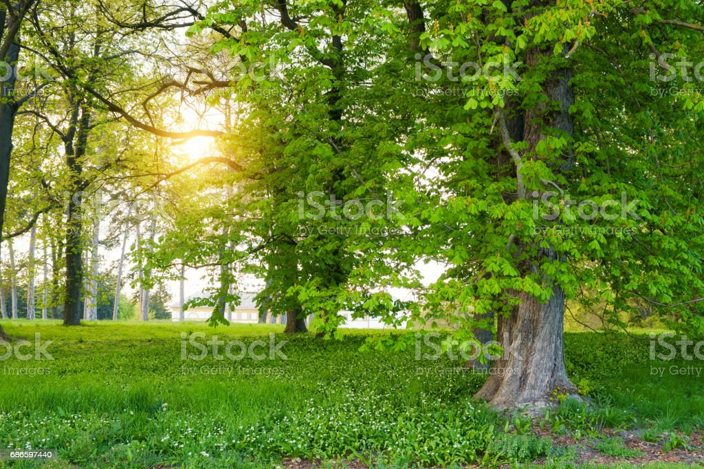Sunlight in the green forest springtime royalty-free stock photo