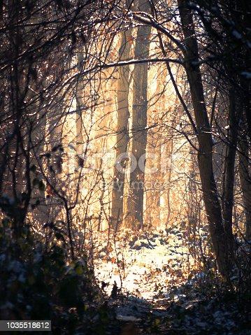sunlight in winter in snow forest
