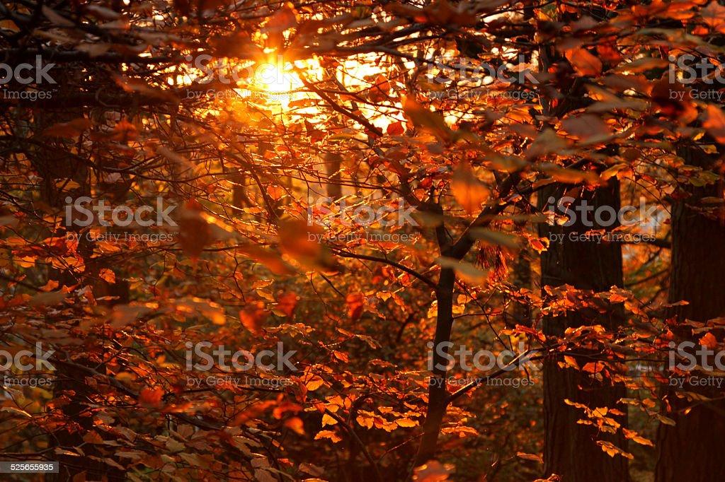 Sunlight on autumn Leaves stock photo