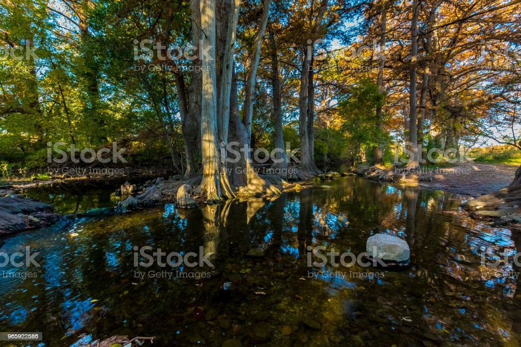 Zonlicht op Fall gebladerte op Cibolo Creek (Texas). - Royalty-free Bald Cypress Tree Stockfoto
