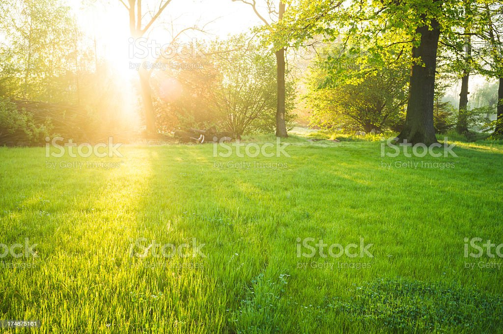 Sunlight on fresh lawn in park during spring season. stock photo