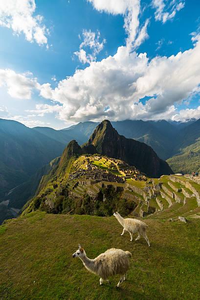 Sunlight on Machu Picchu, Peru, with llamas stock photo