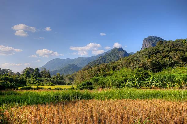 Sunlight on paddy field in Laos stock photo
