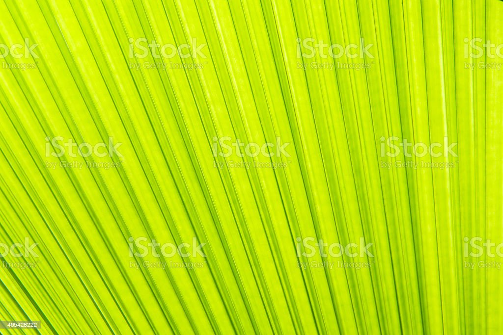 Sunlight on palm leaf 免版稅 stock photo