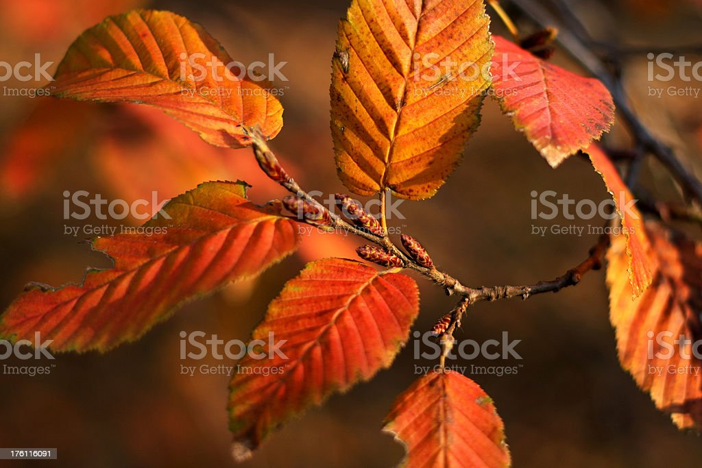 Sunlight on the leaves royalty-free stock photo