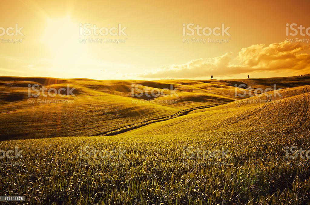 Sunlight on Tuscany crop landscape at dusk royalty-free stock photo