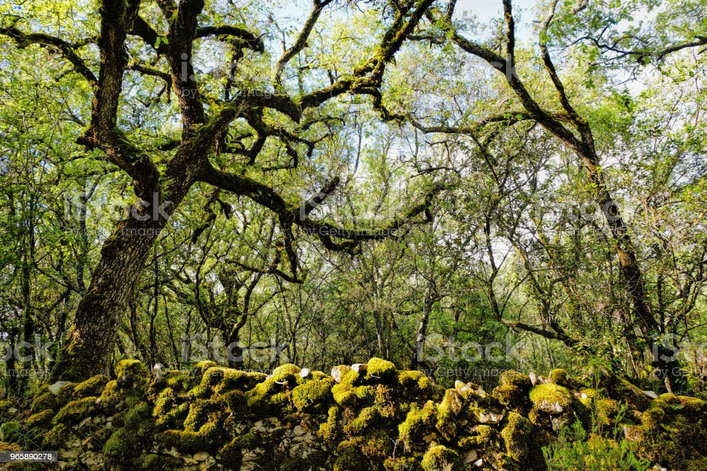 Zonlicht over groen bos lente zomer - Royalty-free Blad Stockfoto
