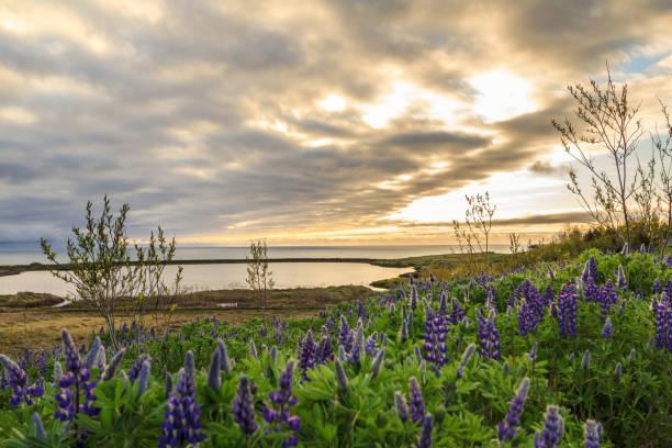 Sunlight over Skjalfandi stock photo