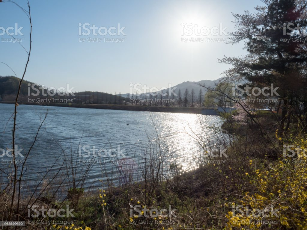 Sunlight over the lake stock photo