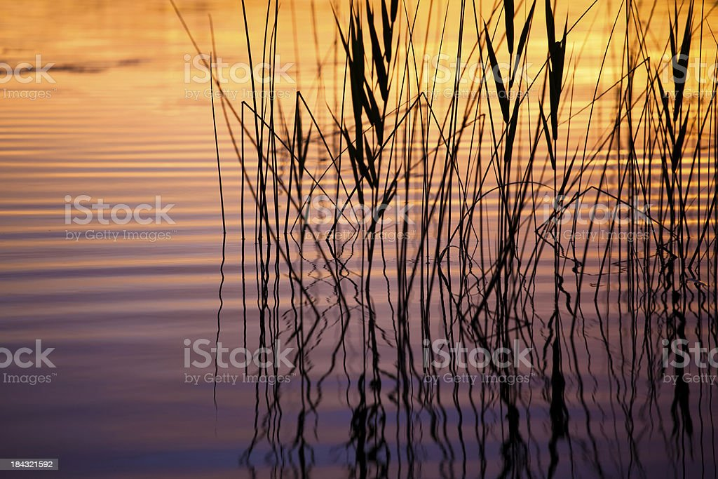 Sunlight reflecting on gentle waves, reed royalty-free stock photo