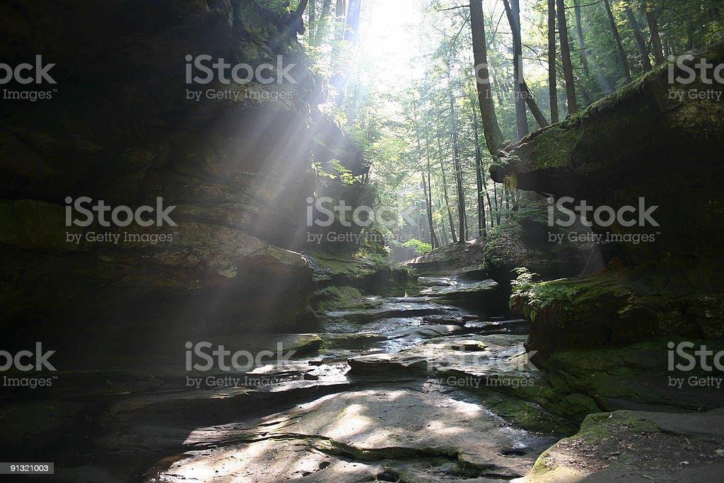 Sunlight shining through forest onto serene rocky creek royalty-free stock photo