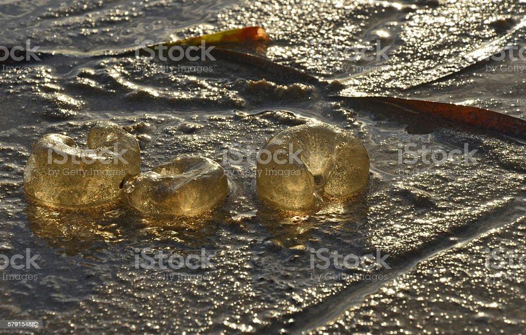 Sunlight shining through Moon Snail eggs on the beach stock photo