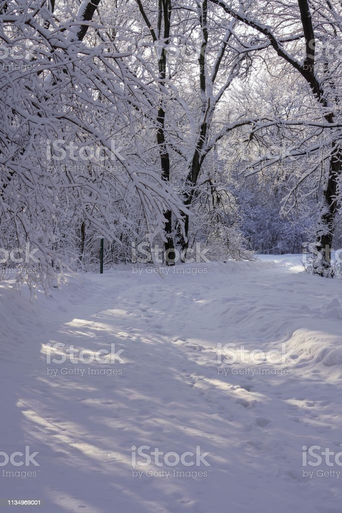 Sunlight Shining Through Trees covered with Hoarfrost along a Walking Trail stock photo