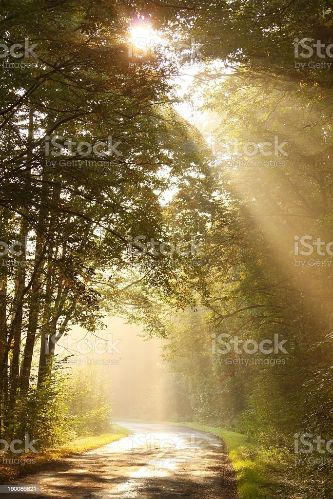Sunlight shining through trees in a misty forest stock photo