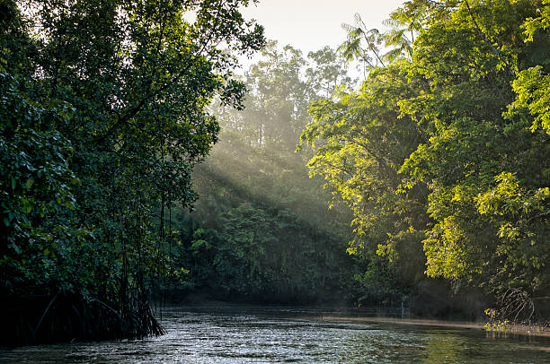 Sunlight shining through trees on river in Amazon rainforest River of the Amazon and the fog over the river and rainforest early in the morning amazon river stock pictures, royalty-free photos & images