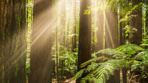 Sunlight sneaking through forest. stock photo