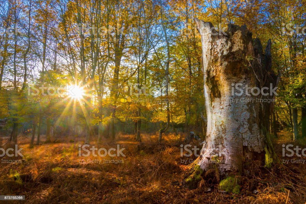 Sunlight streams through trees and leaves in the New Forest stock photo
