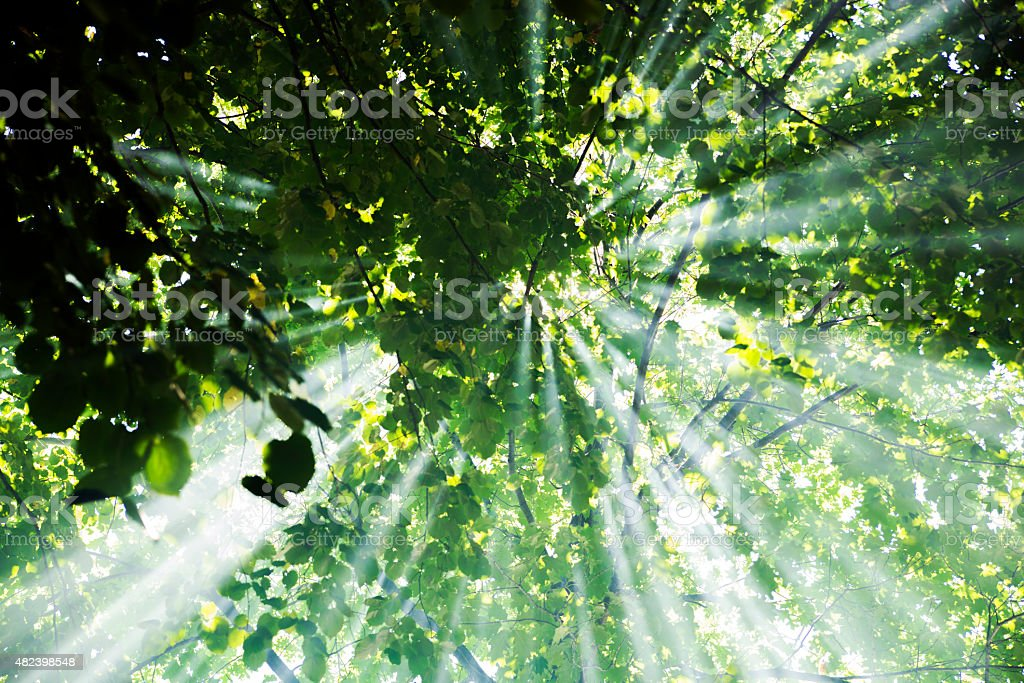 sunlight, Sunbeams in mystical forest stock photo