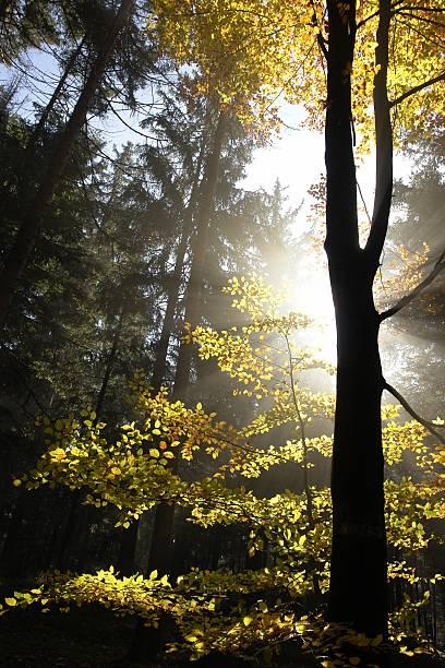Sonnenlicht durch den Wald – Foto