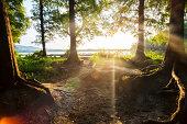 sunlight through  forest