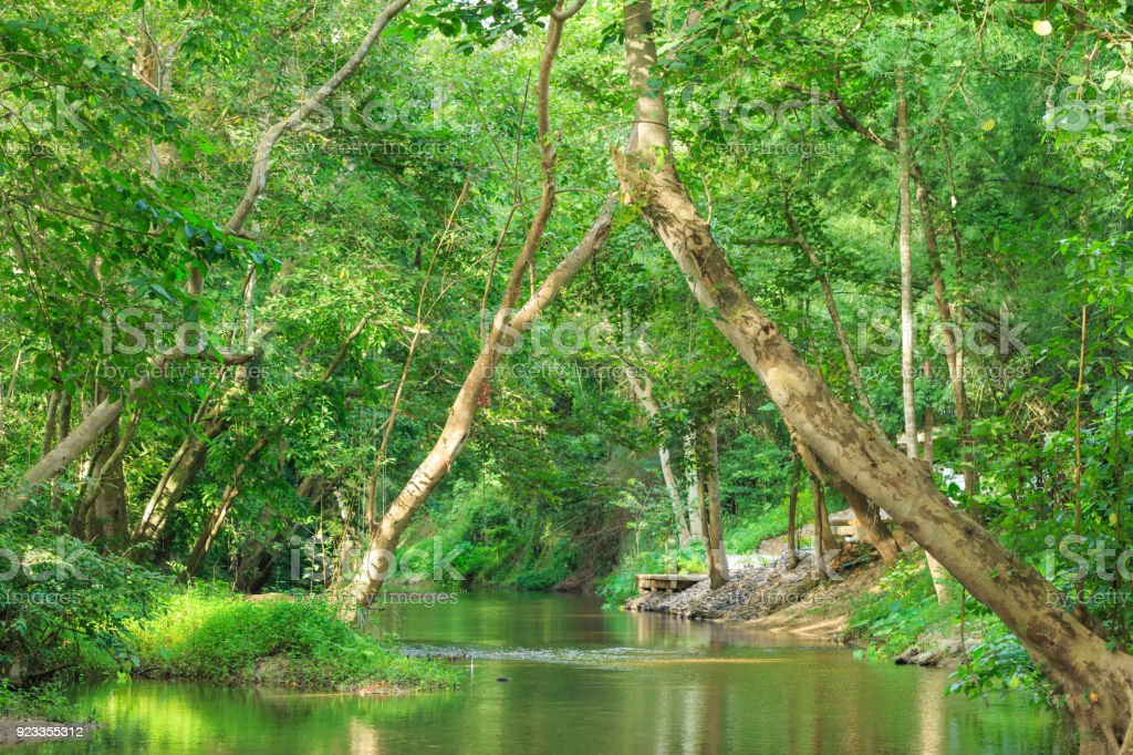 Sunlight through leaves of trees in tropical rainforest park in Thailand with beautiful clear pond and old big tree on foreground stock photo