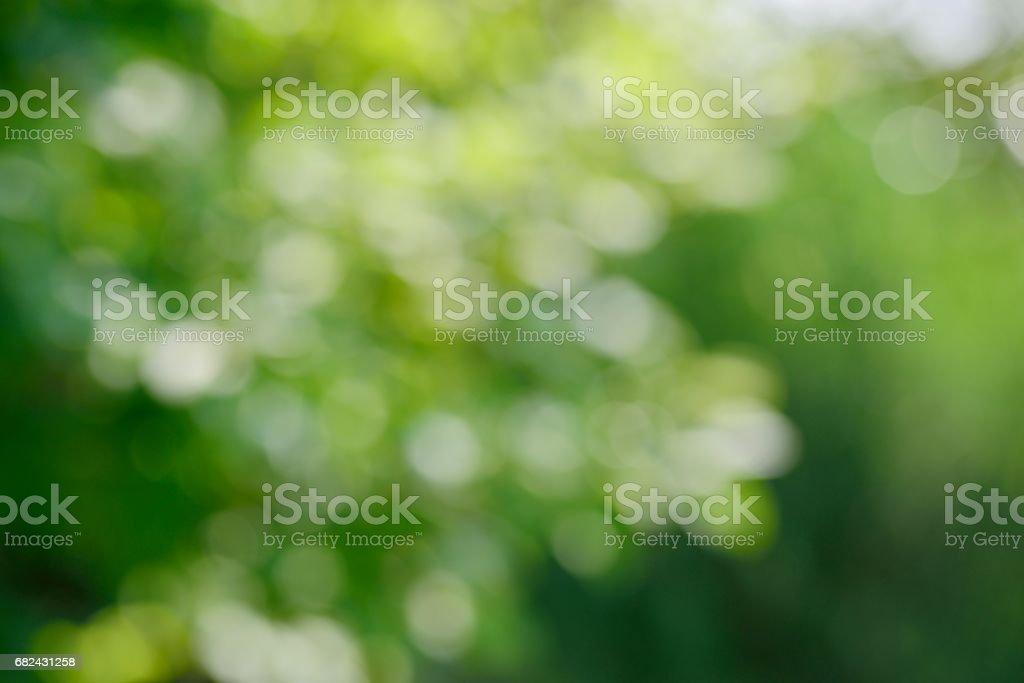 Sunlight through leaves on tree royalty-free stock photo
