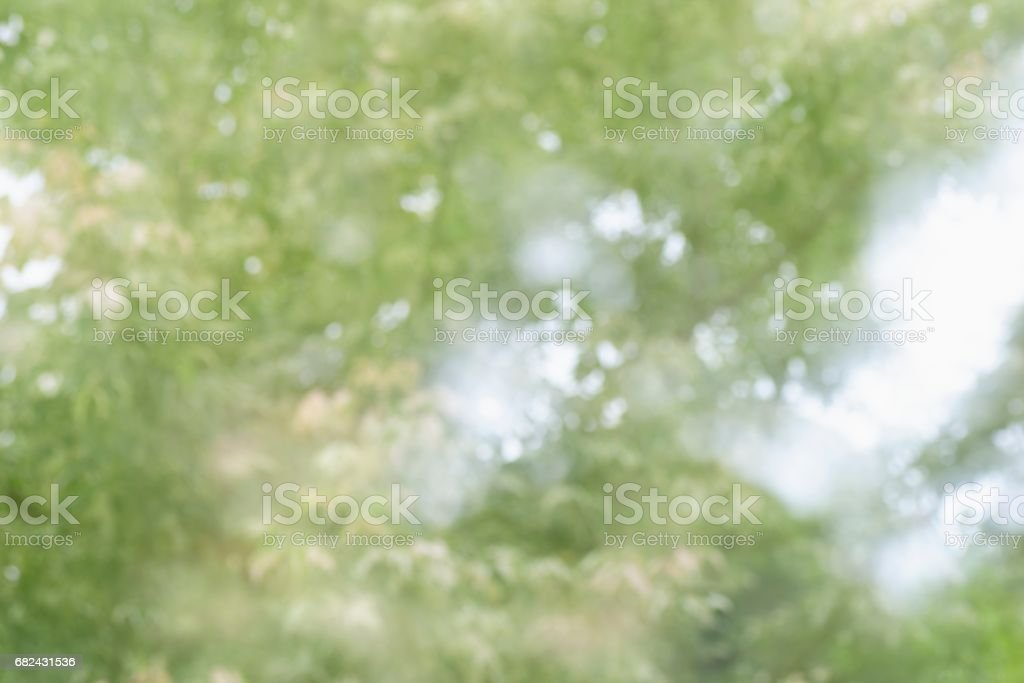 Sunlight through leaves on tree royalty-free stock photo