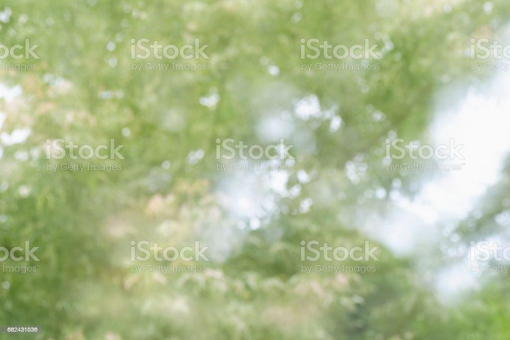 陽光透過樹上的葉子 免版稅 stock photo