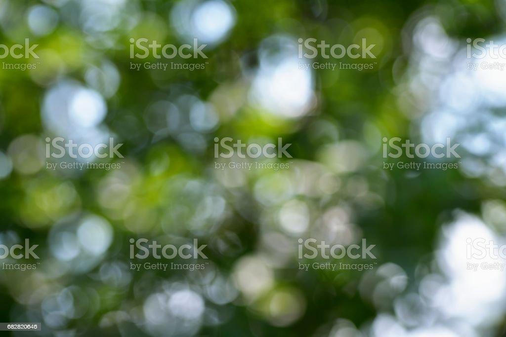 Sonnenlicht durch Blätter am Baum Lizenzfreies stock-foto