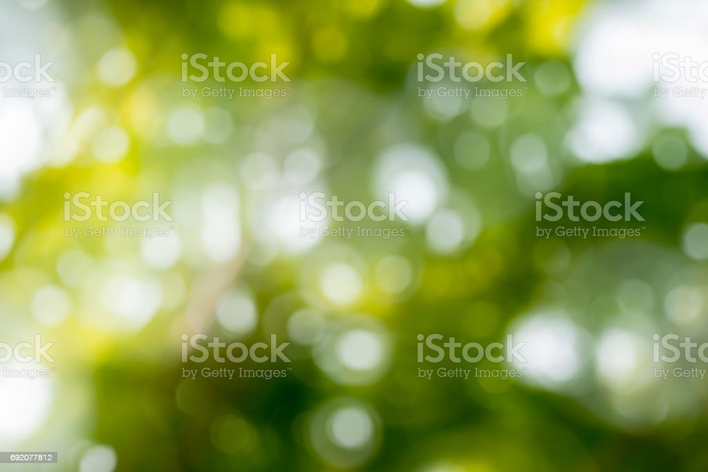 Sunlight through leaves on tree stock photo