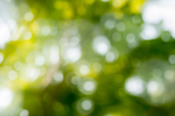sunlight through leaves on tree - soft focus stock photos and pictures