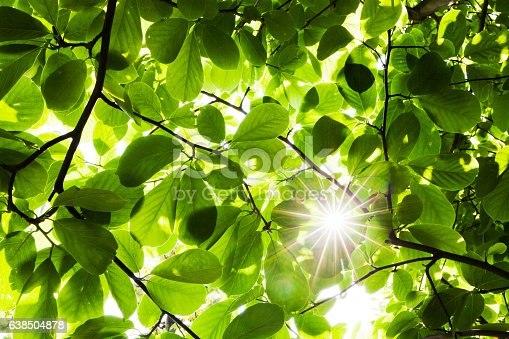 Ray Through Green Leaves