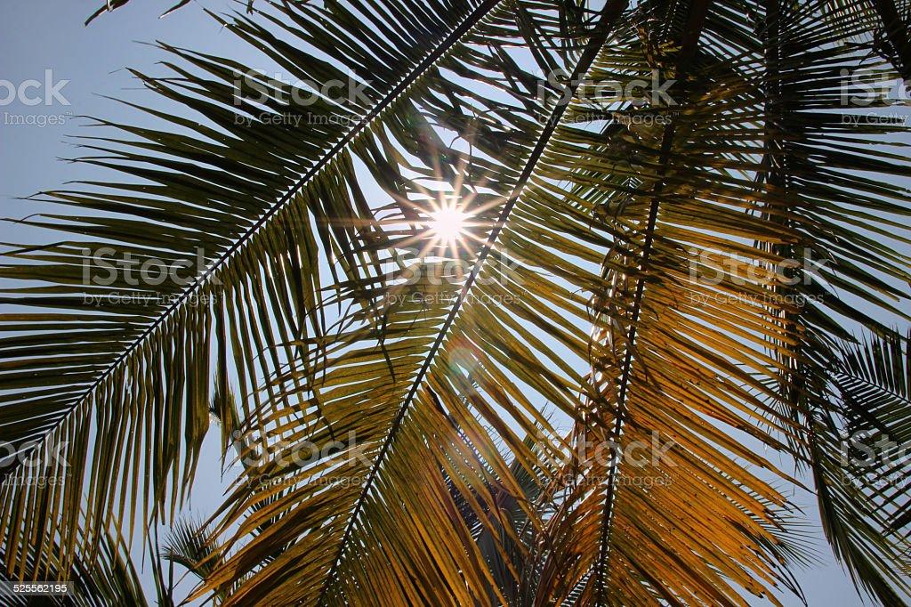 Sunlight through palms leaves on the blue sky 免版稅 stock photo