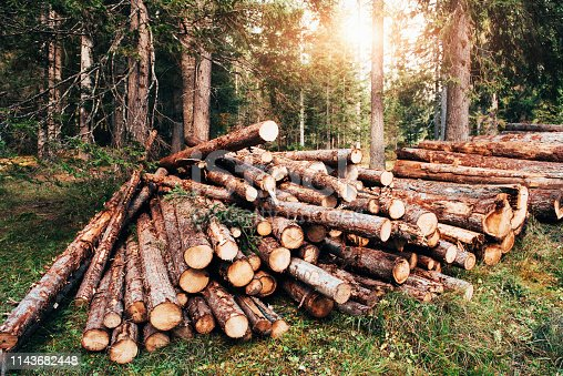 Sunlight through the trees. Freshly harvested wooden logs stacked in a pile in the green forest.